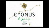 Cygnus Brut  - シグナス ブルット