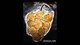 Singulier 2016 - サンギュリエ